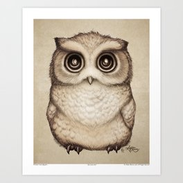 """The Little Owl"" by Amber Marine ~ Graphite & Ink Illustration, (Copyright 2016) Art Print"