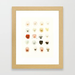 A Taxonomy of Pansies Framed Art Print