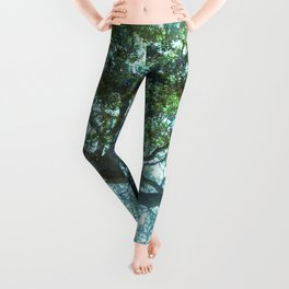 Ramona Oak Tree Leggings