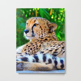 Cheetah Acinonyx Jubatus Wild Cat Metal Print