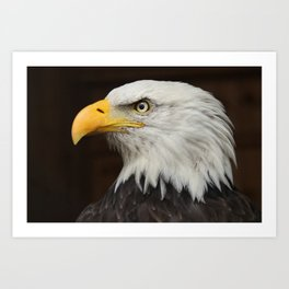 Eagle Photography | Nature | Wildlife Art | American | Rustic Wall Art | Animal Photography Art Print