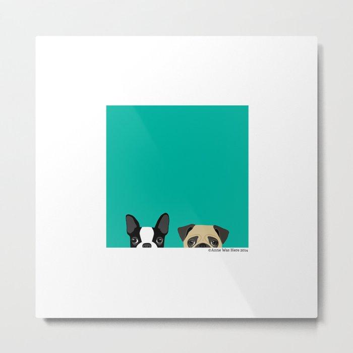 B Terrier & Pug Metal Print