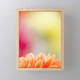 Orange Dahlia Framed Mini Art Print