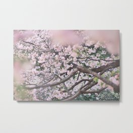 Cherry Blossoms 5 Metal Print