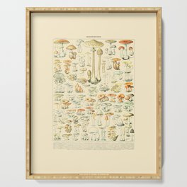 Mushrooms // Champignons III by Adolphe Millot 19th Century Science Textbook Diagram Artwork Serving Tray