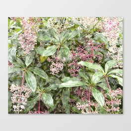 Nature wallpaper, leaves and flowers Canvas Print