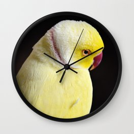 Shy Parakeet Wall Clock