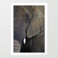 Elephant Portrait Art Print