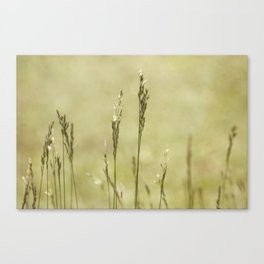 Grass is Greener Canvas Print