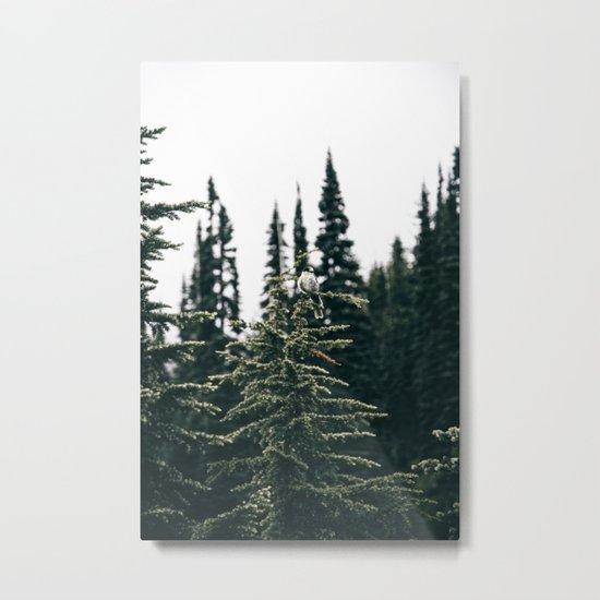 Grey Jay in The Trees Metal Print