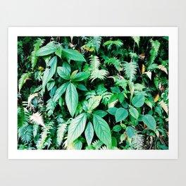 Jungle plants pattern in Minca, Colombia Art Print