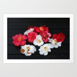 Red and White camelia Art Print