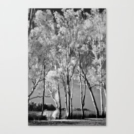 Ghost Gums Canvas Print