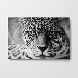 Leopard B&W Metal Print