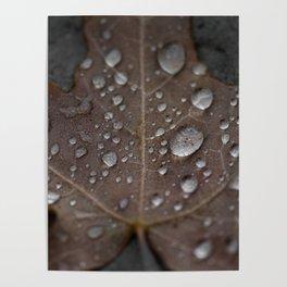 Water Droplet on Leaf Poster