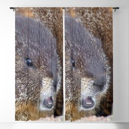 Watercolor Marmot 17, Rocky Mountain National Park, Barking at the Wind Blackout Curtain