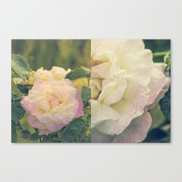 Summer's Rose Canvas Print