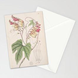 Flower 024 mina lobata Lobe leaved Mina25 Stationery Cards