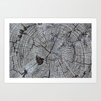 tree rings Art Prints featuring Rings by Elizabeth Velasquez