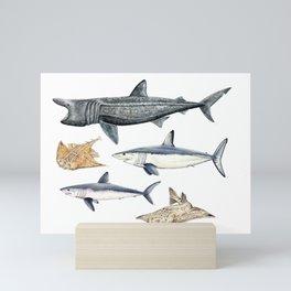 Shark diversity Mini Art Print