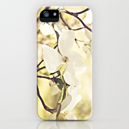 Dogwood in bloom iPhone Case