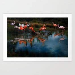 Flamingo Convention Art Print