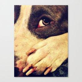Pitbull profile Canvas Print