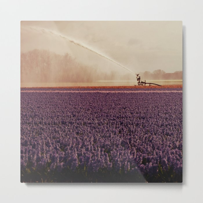 Hyacinth field #3 Metal Print