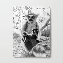 Lemur. Cool. Metal Print