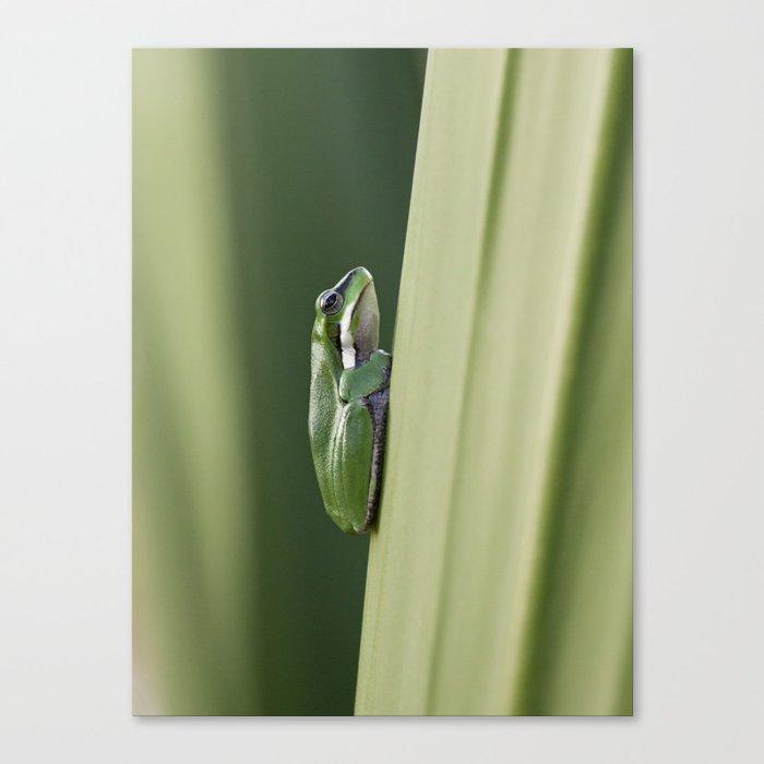 Dwarf Green Tree Frog Canvas Print