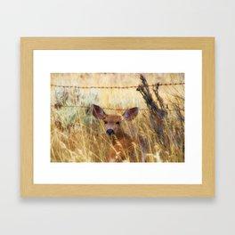The Fawn Framed Art Print