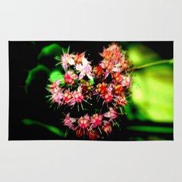 Cacti (Cactaceae) Rug