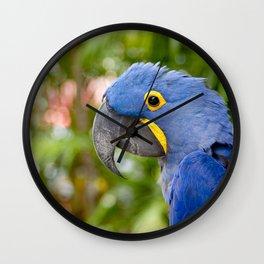Blue Hyacinth Macaw - Anodorhynchus hyacinthinus Wall Clock