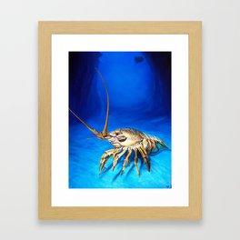 'Crayfish' Framed Art Print