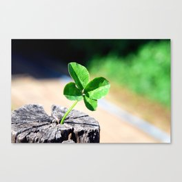 Four leaf clover for good luck Canvas Print