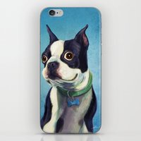 terrier iPhone & iPod Skins featuring Boston Terrier by Jackie Sullivan