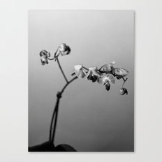 Disgruntled Orchid Canvas Print