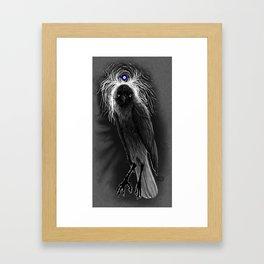 Evil Eye Jackdaw Framed Art Print