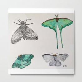 moth collection Metal Print