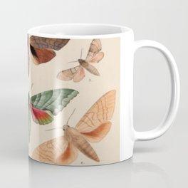Vintage Natural History Moths Coffee Mug