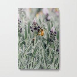 lavender bloom + bee Metal Print