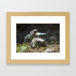Lantern Bug Framed Art Print