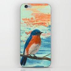 Eastern Bluebird iPhone & iPod Skin