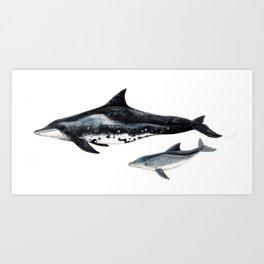 Rough-toothed dolphin (Steno bredanensis) Art Print