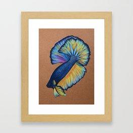 Blue fighting fish Framed Art Print