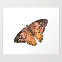 Orange Butterfly Art, Watercolor Butterfly, Nature Painting, Pink Butterfly Art Print