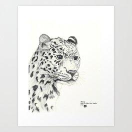 Portrait of Cheetah Art Print