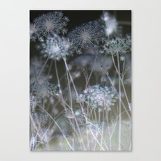 Seeing Stars Canvas Print