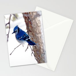 Blue Jay in winter 2 Stationery Cards