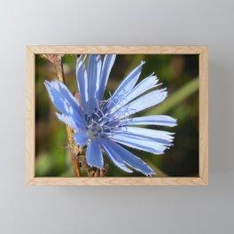 Chicory Framed Mini Art Print